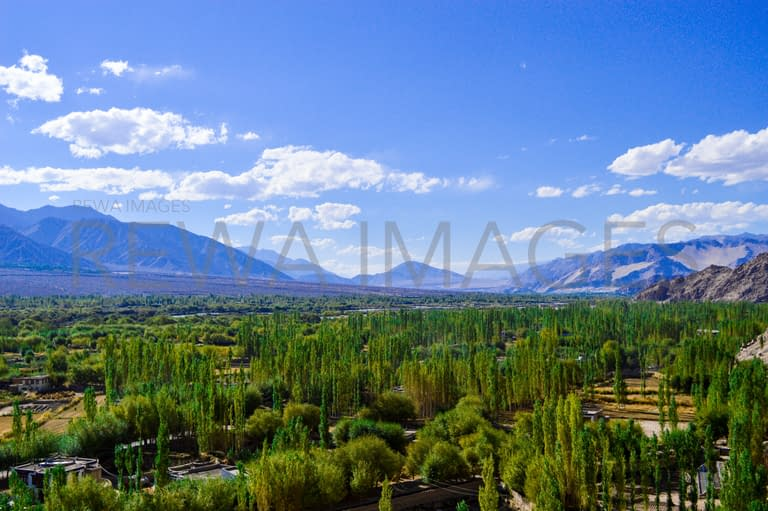 Green and blue of Ladakh